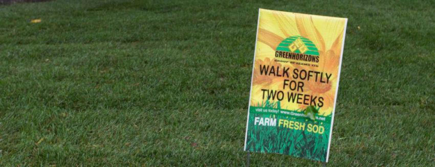 Spring Overseeding Greenhorizons Sod Grass Turf Green Lawn Install