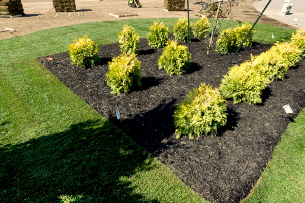 Fall Mulching Grass Turf Green Install