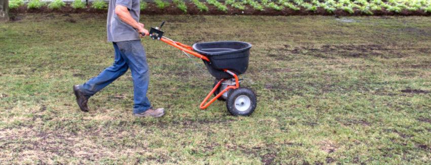 Fertilizer Grass Turf Green Lawn Install
