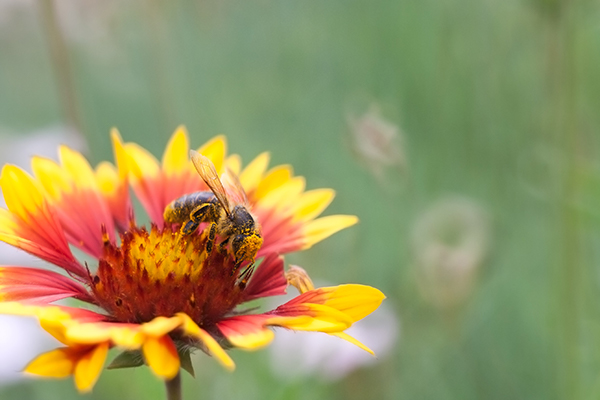 Bee-Friendly Gardens Grass Turf Green Install