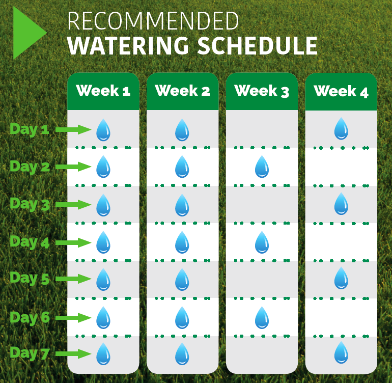 Recommended Watering Schedule for Overseeding